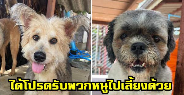 มูลนิธิเพื่อสุนัขในซอย เผยโฉมน้องหมาสายพันธุ์เล็กสุดน่ารัก ให้สามารถรับไปเลี้ยงแบบฟรีๆได้เลย