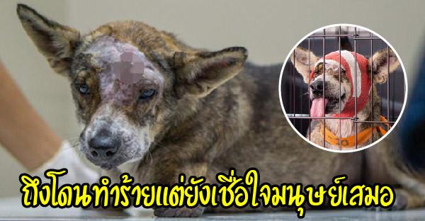 พบกับ 'อามีร่า' สุนัขด้อยโอกาสที่โดนยิง แต่ชีวิตยังคงมุ่งไปข้างหน้าด้วยความหวัง