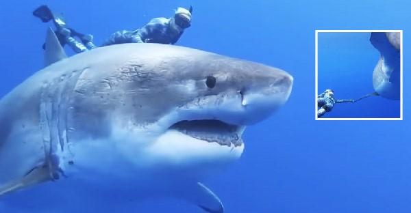 นักประดาน้ำจับครีบฉลามขาวขนาดใหญ่กว่า 20 ฟุต คาดว่าใหญ่ที่สุดเท่าที่เคยมีการถ่ายวิดีโอได้ใกล้ขนาดนี้