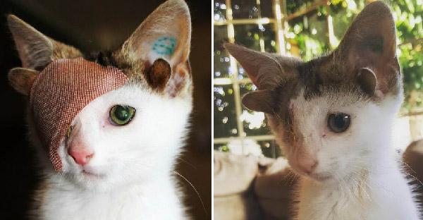 ครอบครัวใจดีช่วยชีวิตลูกแมว 4 หู และมอบบ้านที่อบอุ่นที่สุดให้ตลอดไป