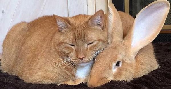 พบกับกระต่ายยักษ์กับแมวเหมียว สองคู่หูที่เข้าขากันจนเจ้าของยังแปลกใจ