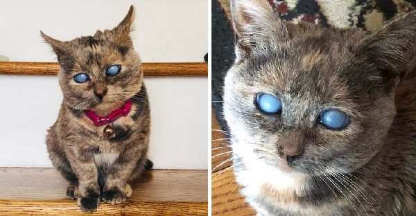 พบกับ ลูกแมวแคระ ตาบกพร่อง ที่จะมีขนาดตัวจิ๋วไปตลอดกาล