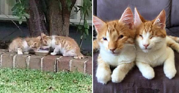 ลูกแมวตาบอดสองตัวถูกทิ้งไว้ลำพัง กอดกันไม่ยอมห่าง ก่อนสาวใจดีช่วยชีวิตไว้