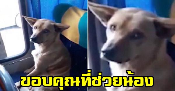 คนขับรถบัสให้สุนัขจรจัดขึ้นมาหลบหนาวบนรถ จนกลายเป็นไวรัลโด่งดังที่มีชาวเน็ตนับล้านชื่นชม