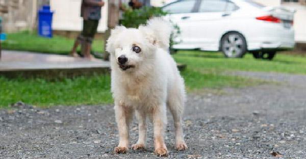 พบกับ 'พิงกี้' สุนัขที่เคยถูกทอดทิ้ง ป่วยสารพัด ก่อนนายใหม่ดูแลมานานกว่า 20 ปีแล้ว