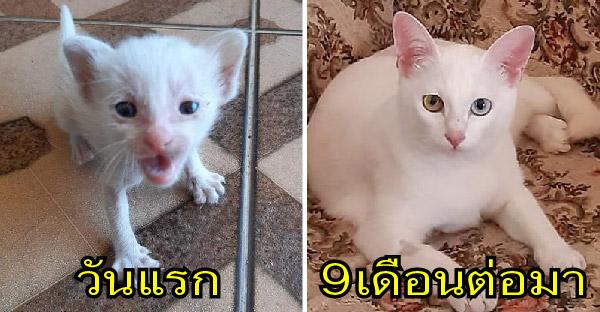 หนุ่มได้ยินเสียงลูกแมวร้องขอความช่วยเหลือในบ้านร้าง ก่อนจะอุ้มกลับบ้านมาเลี้ยงดูอย่างดี