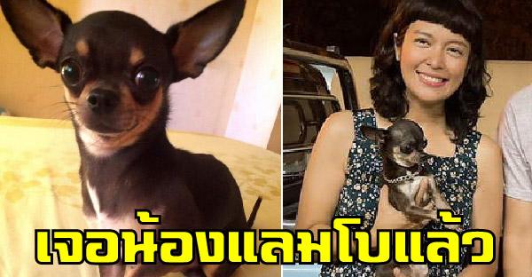 สาวประกาศตามหาสุนัขหาย ผู้แจ้งเบาะแสสองคน รับคนละสามหมื่น พร้อมเหมาก๋วยเตี๋ยวอีก 7 วัน