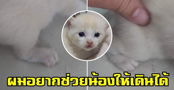 ลูกแมวขาหลังผิดปกติแต่กำเนิด ได้รับการเยียวยาจากทาสหนุ่มจนดีวันดีคืน