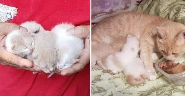 พลเมืองดีช่วยลูกแมวสามตัวจากถังขยะ ก่อนกลับมาวางกับดักพาแม่แมวไปอยู่ด้วยทั้งครอบครัว