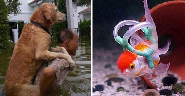 19 ภาพเจ้าของสัตว์เลี้ยงที่ยอมทำทุกอย่าง เพื่อให้ลูกรักสุขกายสบายใจ