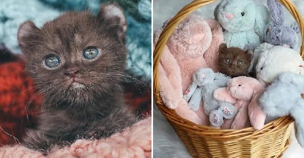 ลูกแมวขาบิดหูเรดาร์น่ารักไม่เหมือนใคร เฝ้ารอโอกาสครั้งที่สองที่เฝ้ารอมาทั้งชีวิต