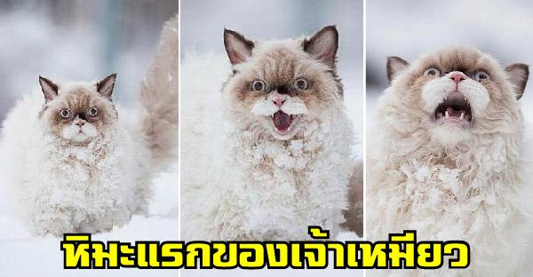 เมื่อสัตว์โลกน่ารักเจอหิมะเป็นครั้งแรก จะมีปฏิกิริยายังไงกันบ้าง