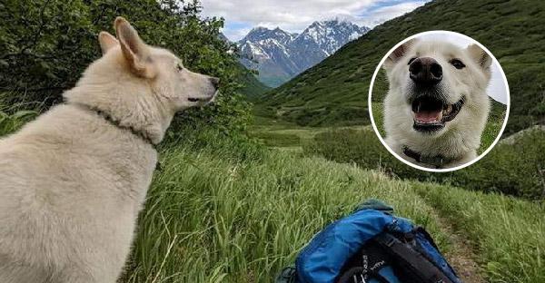 น้องหมาปริศนาโผล่ช่วยสาวลื่นตกภูเขาหิมะ และอยู่เคียงข้างตลอดจนความช่วยเหลือมาถึง