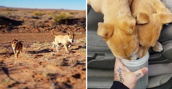 ชายหนุ่มเจอลูกหมาสองตัววิ่งเข้ามาหา ระหว่างขับรถผ่านทะเลทรายอันร้อนระอุ