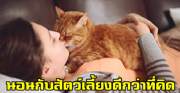 งานวิจัยชี้การนอนกับสัตว์เลี้ยง ส่งผลดีกับเจ้าของมากกว่าที่คิด