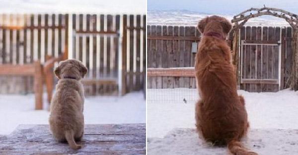 15 การเปลี่ยนแปลงของน้องหมา ที่น่ารักเหมือนเดิมไม่เปลี่ยนแปลง