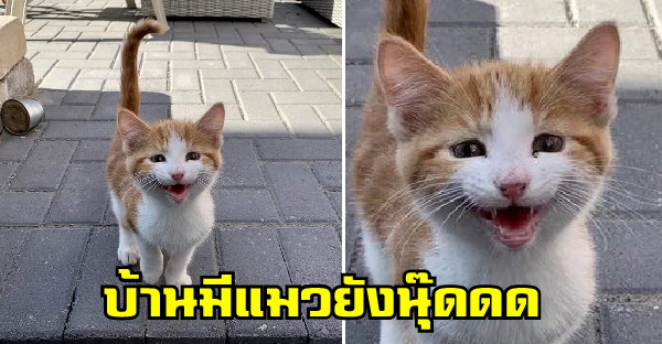 สาวใจดีพยายามหาบ้านให้ลูกแมวจรจัด แต่น้องน่ารักจนชนะใจและได้บ้านอยู่ถาวร