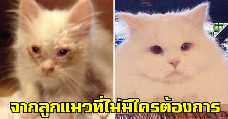 ลูกแมวที่ไม่มีใครต้องการ ถูกช่วยเหลือจนสวยเช้ง กลายเป็นแมวที่ใครต่างพากันหลงใหล