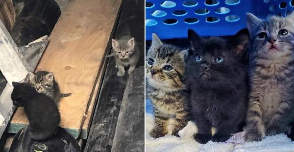 อาสากู้ภัยสัตว์ช่วยลูกแมวสามตัวในห้องใต้ดินทันเวลา ก่อนร้านค้าจะปิดยาวเพราะโควิด