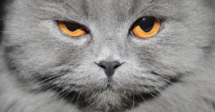 12 เรื่อง (ไม่) ลับ ที่เหล่าสัตว์เลี้ยงอยากบอกให้เจ้าของรู้ไว้