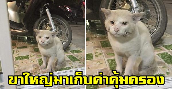 แมวจรขาใหญ่ ยืนกดดันขออาหารจากบ้านทาสแมว ด้านชาวเนตแชร์ประสบการณ์เจอเหมือนกัน