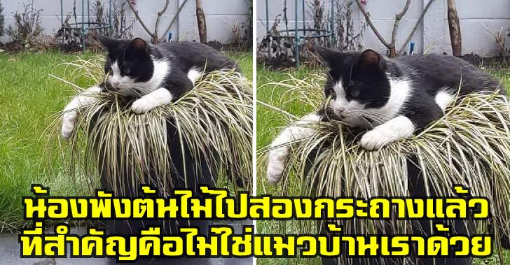 เหล่าทาสแมวที่เจ็บปวดกับพฤติกรรมเจ้าเหมียว แต่ต้องทนต่อไปเพราะพวกเขาคือทาสแมว