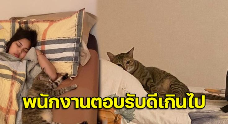 แมวใครไม่รู้  เข้ามาหาทำตีสนิท สักพักเข้ามานอนด้วยเฉย