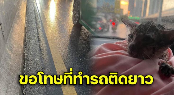 สาวเจอแมวบนทางด่วน  สีขนก็กลืนไปกับถนนหากไม่ช่วยคงจบชีวิต