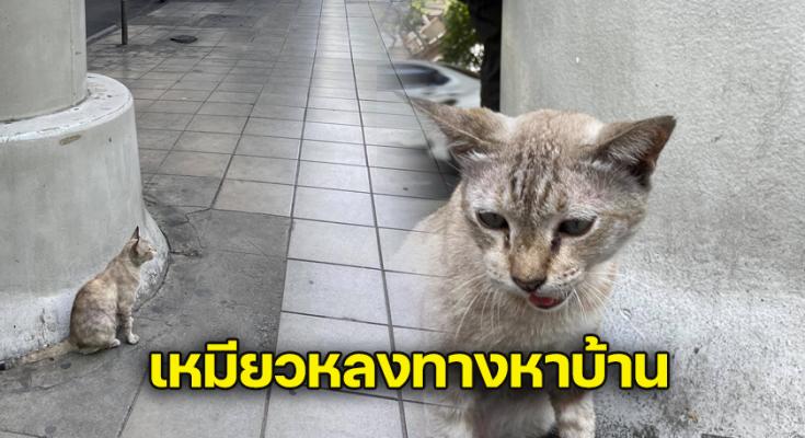 หนุ่มโพสต์ตามหาเจ้าของแมว หลังเจออยู่ข้างทาง
