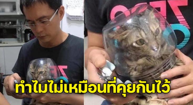 วิธีนี้ หมดปัญหา การตัดเล็บแมว