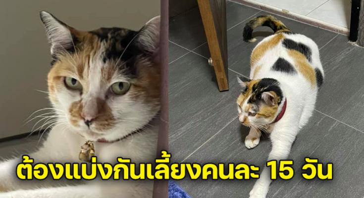 ประกาศหาเจ้าของแมว หลังหลงรักมาก