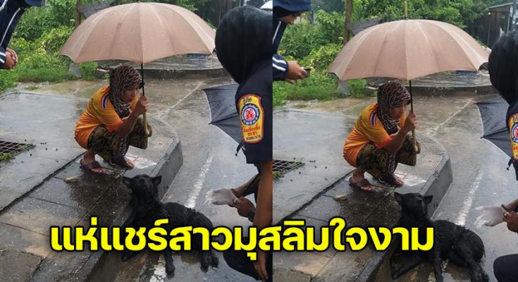 สาวมุสลิมใจงาม  กางร่มให้น้องหมาที่ประสบอุบัติ