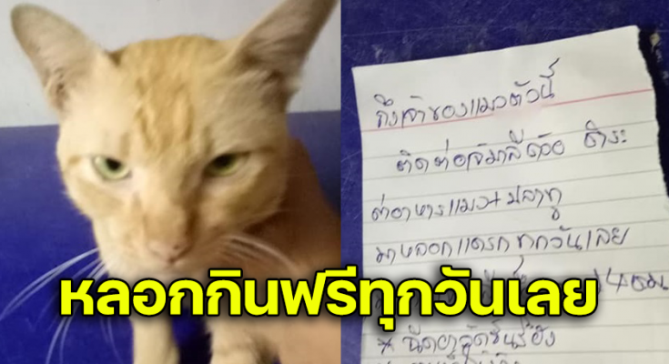 โดนแมวหลอกมาขอกินปลาทู ตังค์ไม่เคยจ่ายเลย