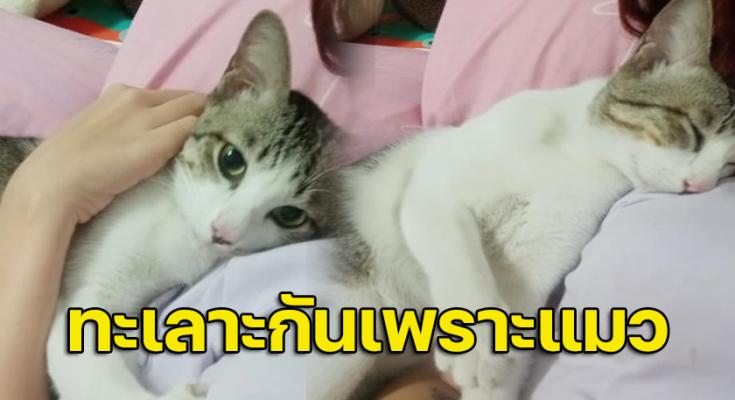 สาวระบายมีปัญหากับแฟนเพราะแมว