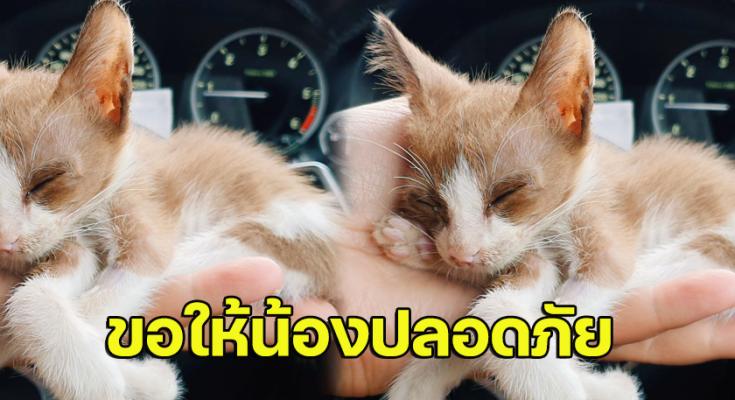 สุดประทับใจ หลังเก็บแมวข้างทางรักษา