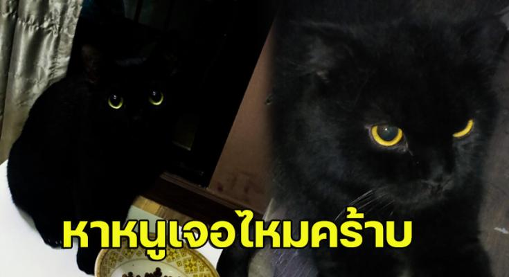 สาวโพสต์ภาพแมวตัวเอง แต่ชาวเน็ตกลับหาไม่เจอ