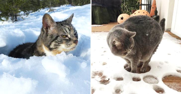 ปฏิกิริยาสุดเฮฮาของแมวเหมียว ที่ได้สัมผัสหิมะเป็นครั้่งแรก