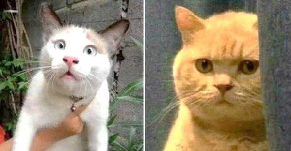 """ชาวเนตขอภาพ """"แมวกวนทีน"""" ที่ดูแล้วหายเครียด เหล่าทาสแมวจึงจัดชุดใหญ่ให้ฮากันสนั่น"""