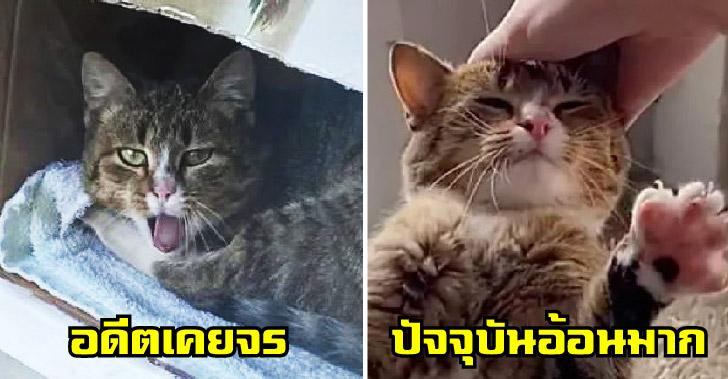 แมวจรจัดขู่ใส่ทุกคนที่เข้าใกล้ ก่อนแพ้ใจสาว ยอมเข้าบ้านมาอยู่ด้วย