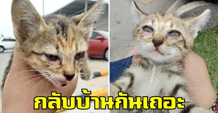 ลูกแมวลายสลิดตกรถบรรทุก ก่อนคู่รักขี่มอไซค์พากลับบ้าน เอาไปเลี้ยงดูแลอย่างดี