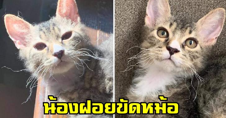 ขวัญใจทาสแมวตัวใหม่ พบกับน้อง 'ฝอยขัดหม้อ' ขนหยิกหยอย หงิกยันหนวด