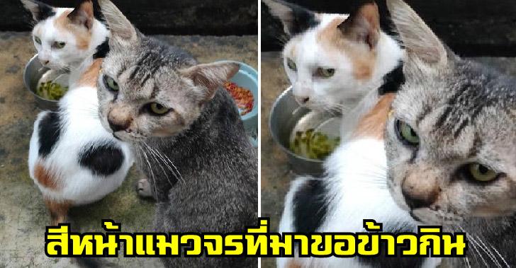 สาวย้ายห้องใหม่เริ่มให้อาหารแมวจรตัวเดียว ก่อนน้องจะพาเมียมาฝากตัว ล่าสุดเอาลูกมาให้เลี้ยงด้วย
