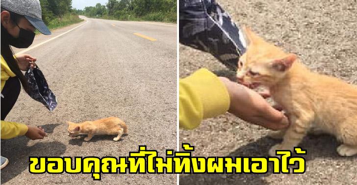 ลูกแมวส้มอยู่กลางถนนลำพัง คลานเข้าหาคนใจดี หวังจะได้มีบ้านอยู่กับเขาบ้าง