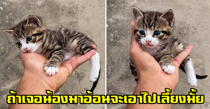 หากเจอลูกแมวจรมาอ้อนที่ขา จะพากลับบ้านหรือแค่ลูบๆแล้วจากไปดี