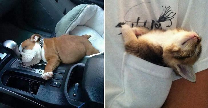 มัดรวมภาพสัตว์เลี้ยงน่ารักที่ง่วงนอนเมื่อไร ก็พร้อมจะหลับได้ทุกที่ทุกเวลา