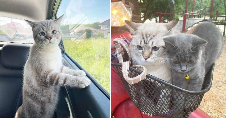 ความน่ารักปนเฮฮาของน้องแมว ที่ออกไปเที่ยวกับเหล่าทาสของพวกเขา