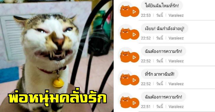 เจ้าเหมียวยิ้มหวาน คร่ำครวญ จนแอพแปลไทยออกมาได้อย่างฮา