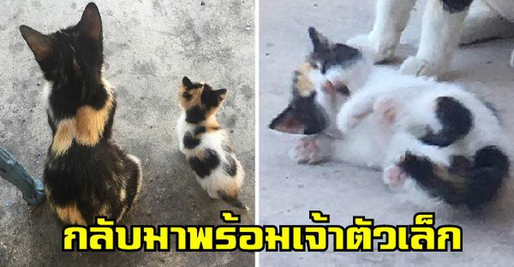 แมวจรจัดที่ให้ข้าวทุกวันหายหน้าไปเกือบเดือน ก่อนนางจะกลับมาพร้อมเจ้าตัวเล็ก