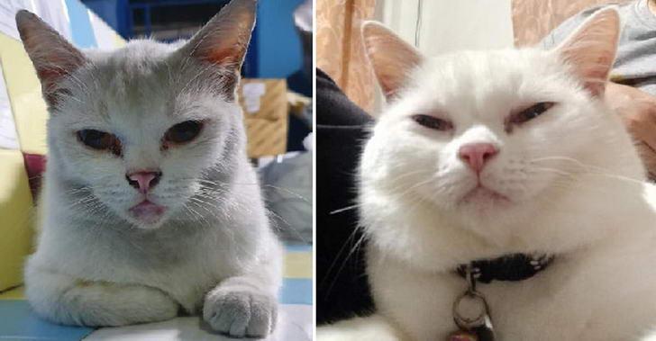 15 ภาพอดีตแมวจรจัดที่ได้รับการช่วยเหลือ จนปัจจุบันมูฟออนเป็นเจ้าของบ้านเรียบร้อย