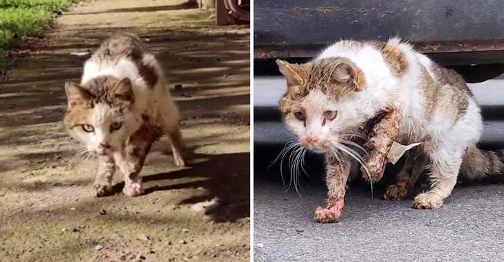 แมวข้างถนนถูกรถชนไร้คนเหลียวแล ขอโอกาสสู้ต่อชีวิต แม้สัตวแพทย์ไม่เห็นด้วย